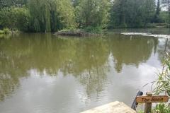 1. The Basin