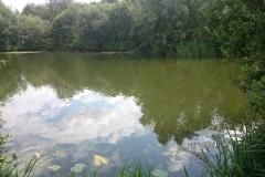 grove2