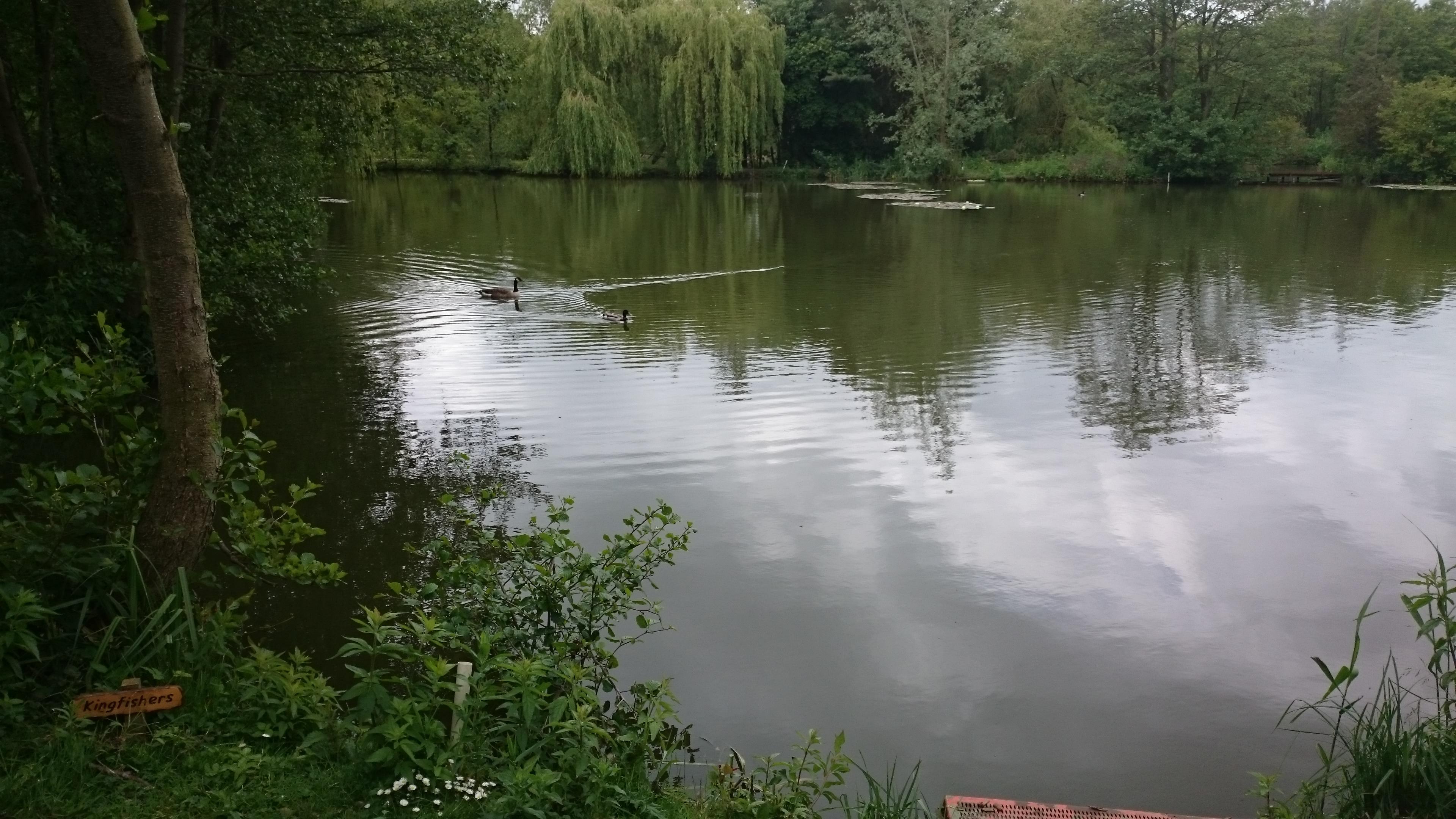 18. Kingfishers